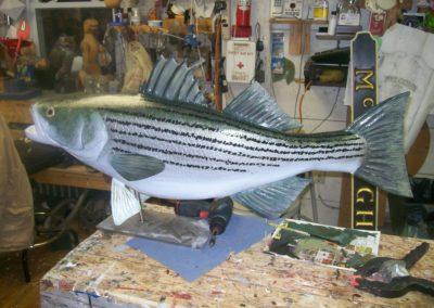 striped bass 002